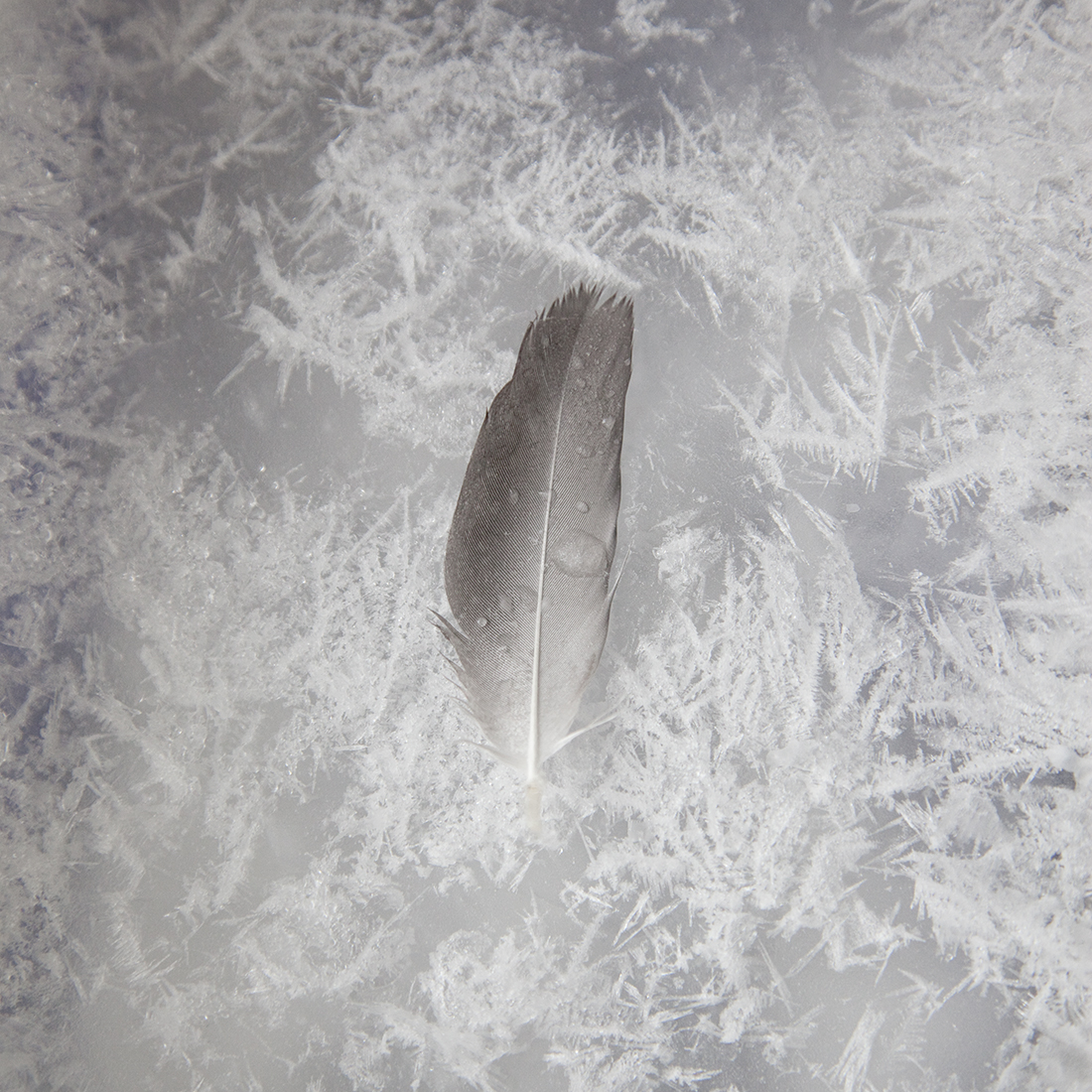 Experiment Ice Feather