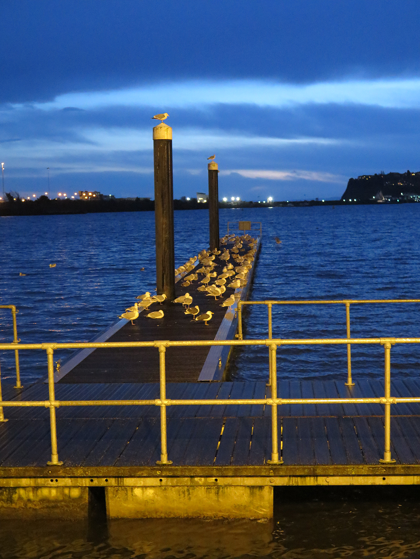 Gulls Roosting at Night Cardiff Bay