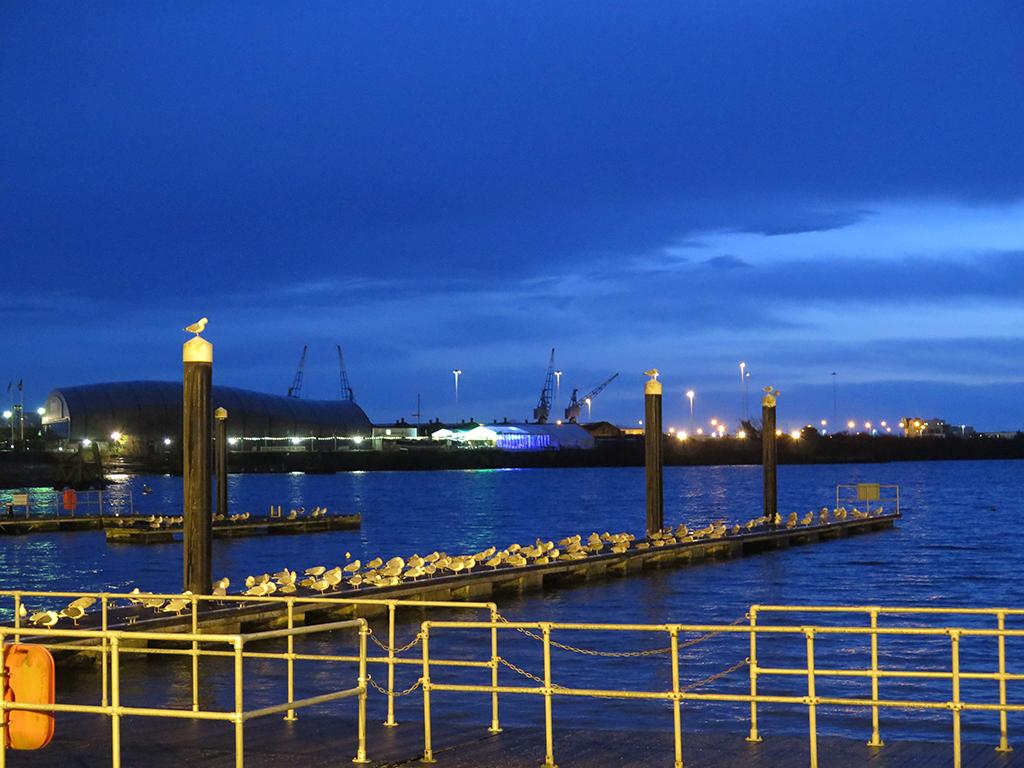 Cardiff-Gulls-Night-Roost